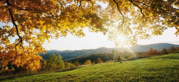 Autumn Leaves_full